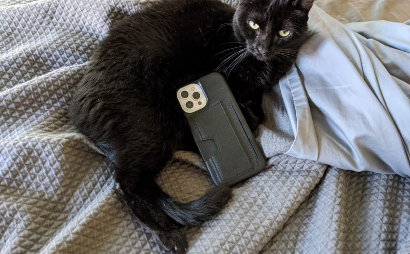 kitteh is not impressed with the iPhone